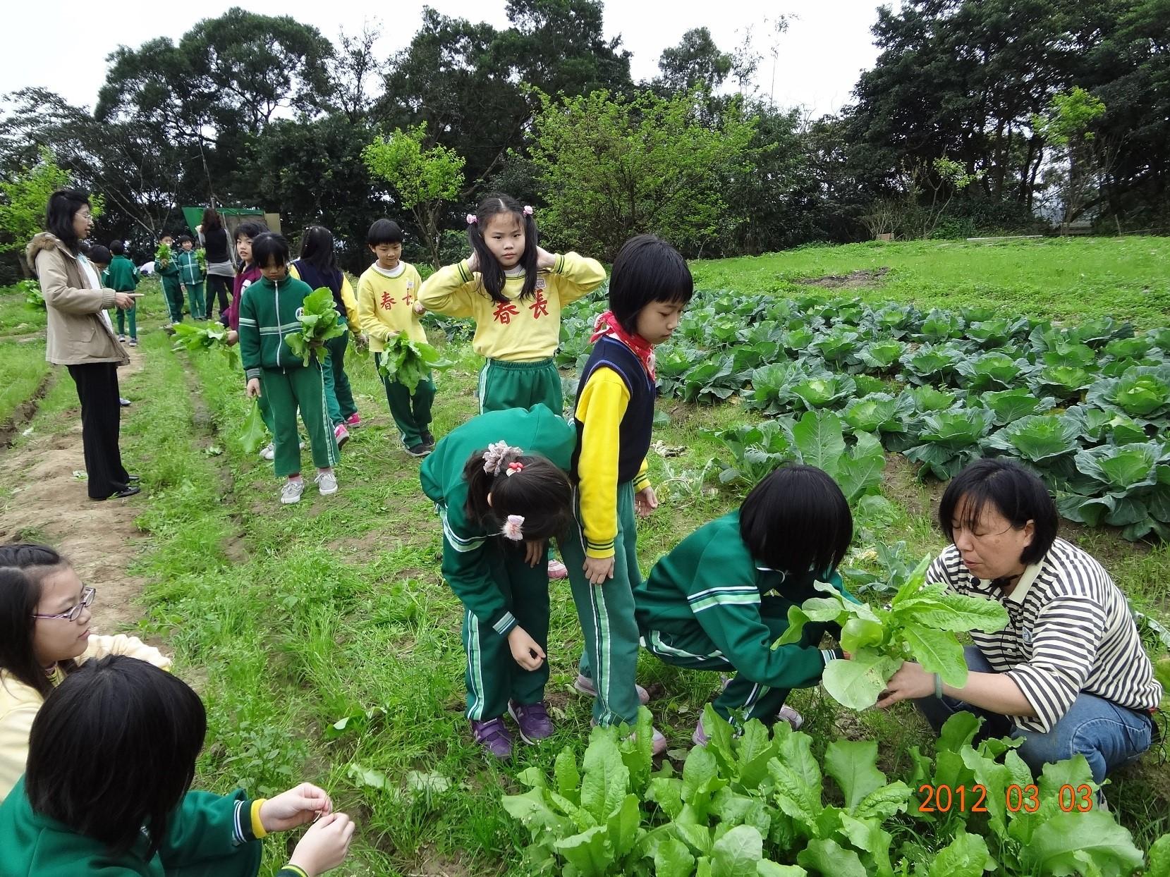plant teaching