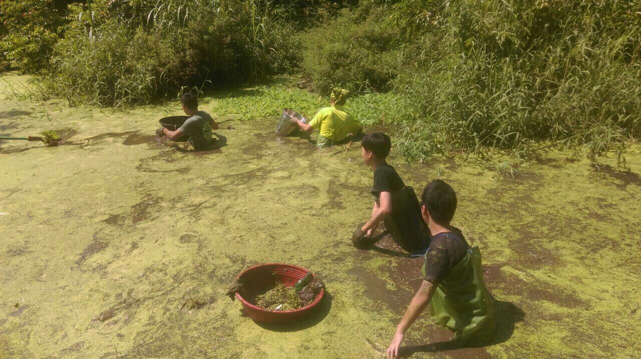 炎炎夏日志工夥伴仍利用工作假期清理榮星花園公園生態池