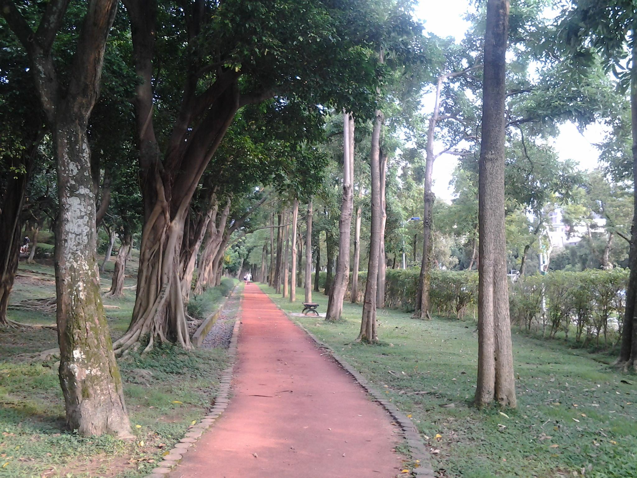 5.綠樹成蔭的健走步道
