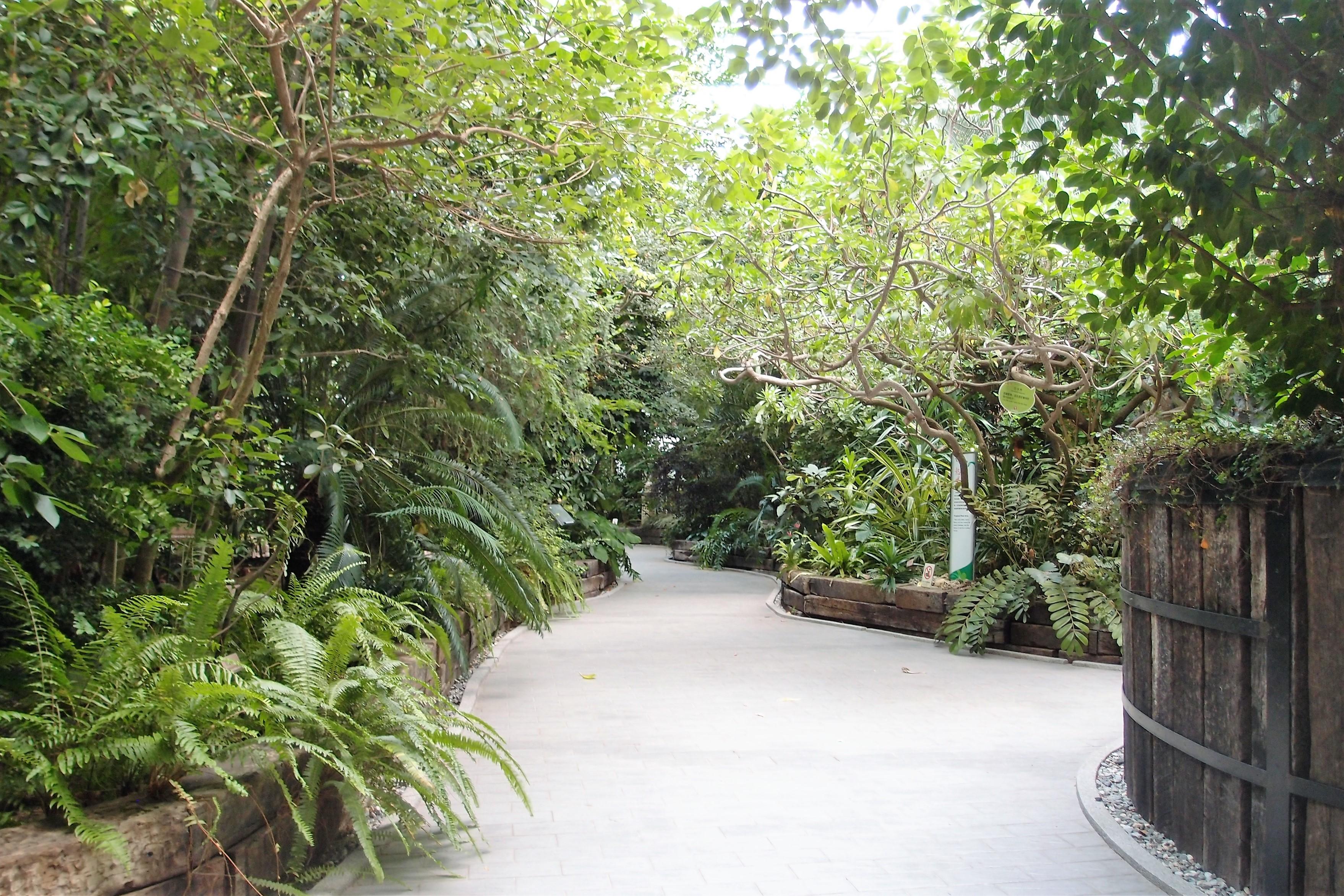圖3、長期溫控終年綠意盎然的典藏館入口。
