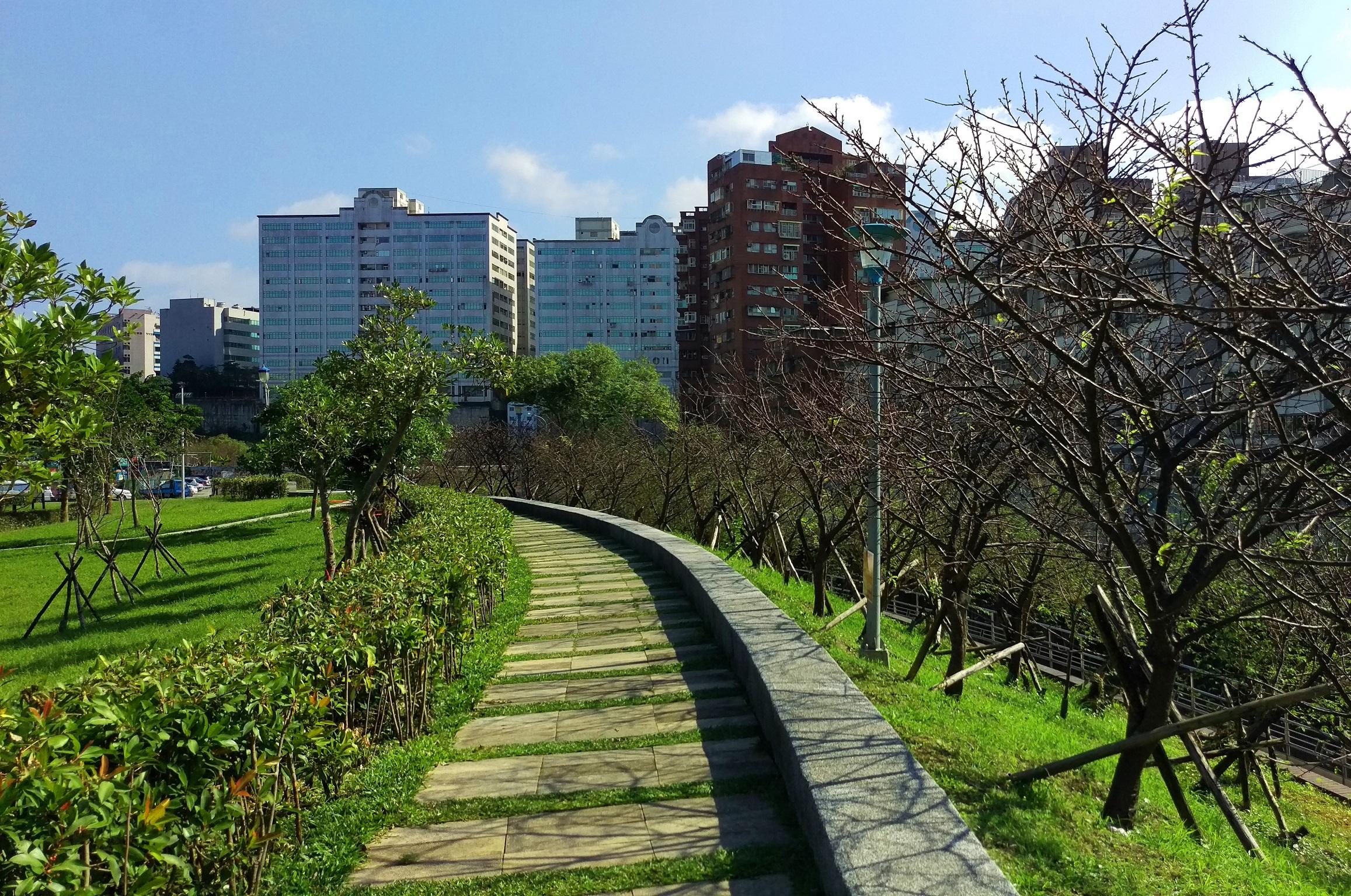 圖4、106年樂活公園櫻花含苞待放,預計於農曆年盛放。