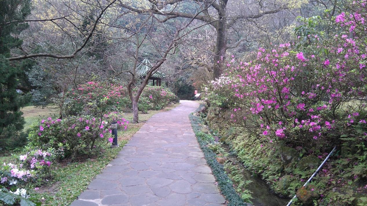圖3 陽明公園的杜鵑花(1)