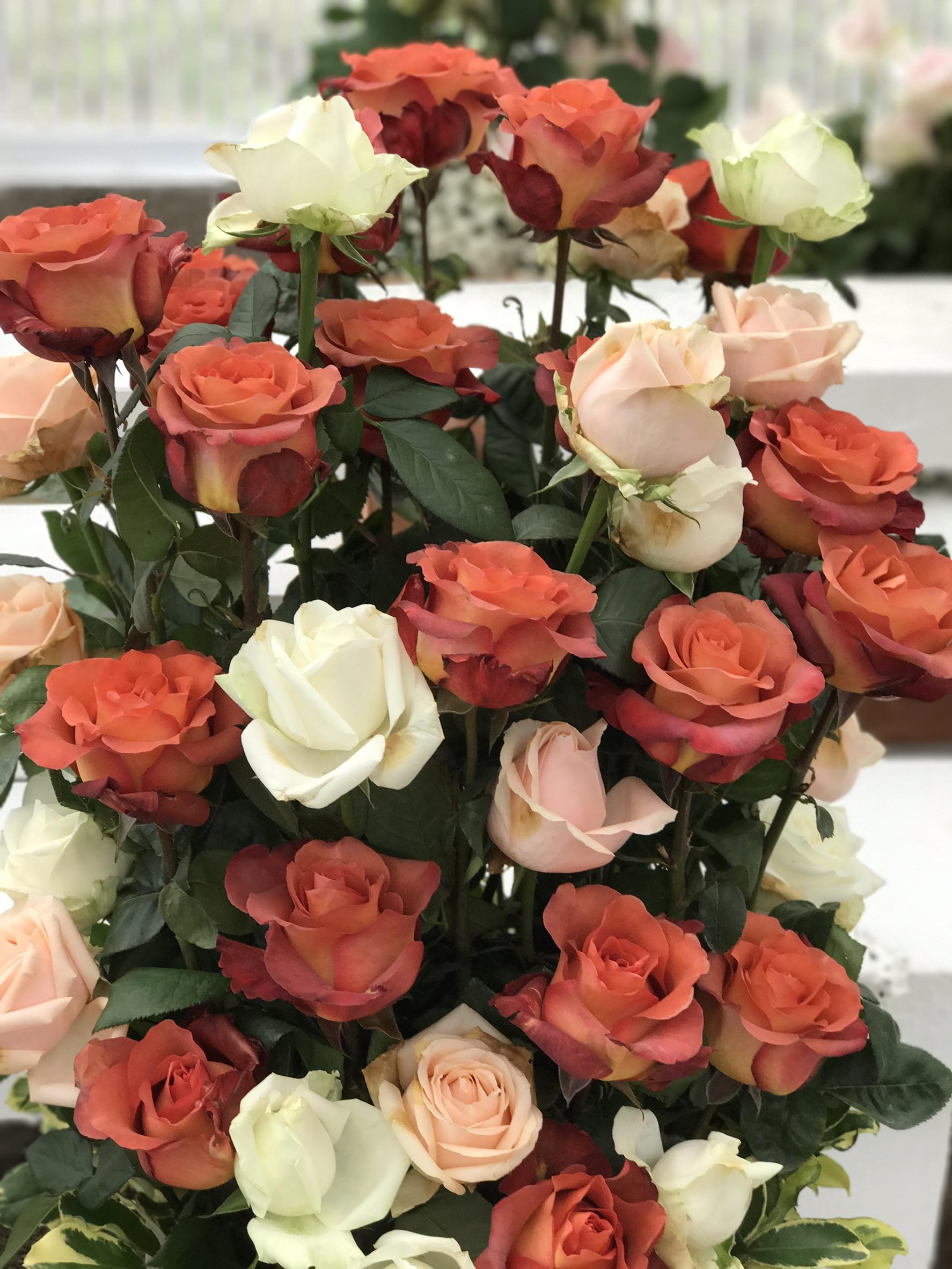 圖24.玫瑰花展