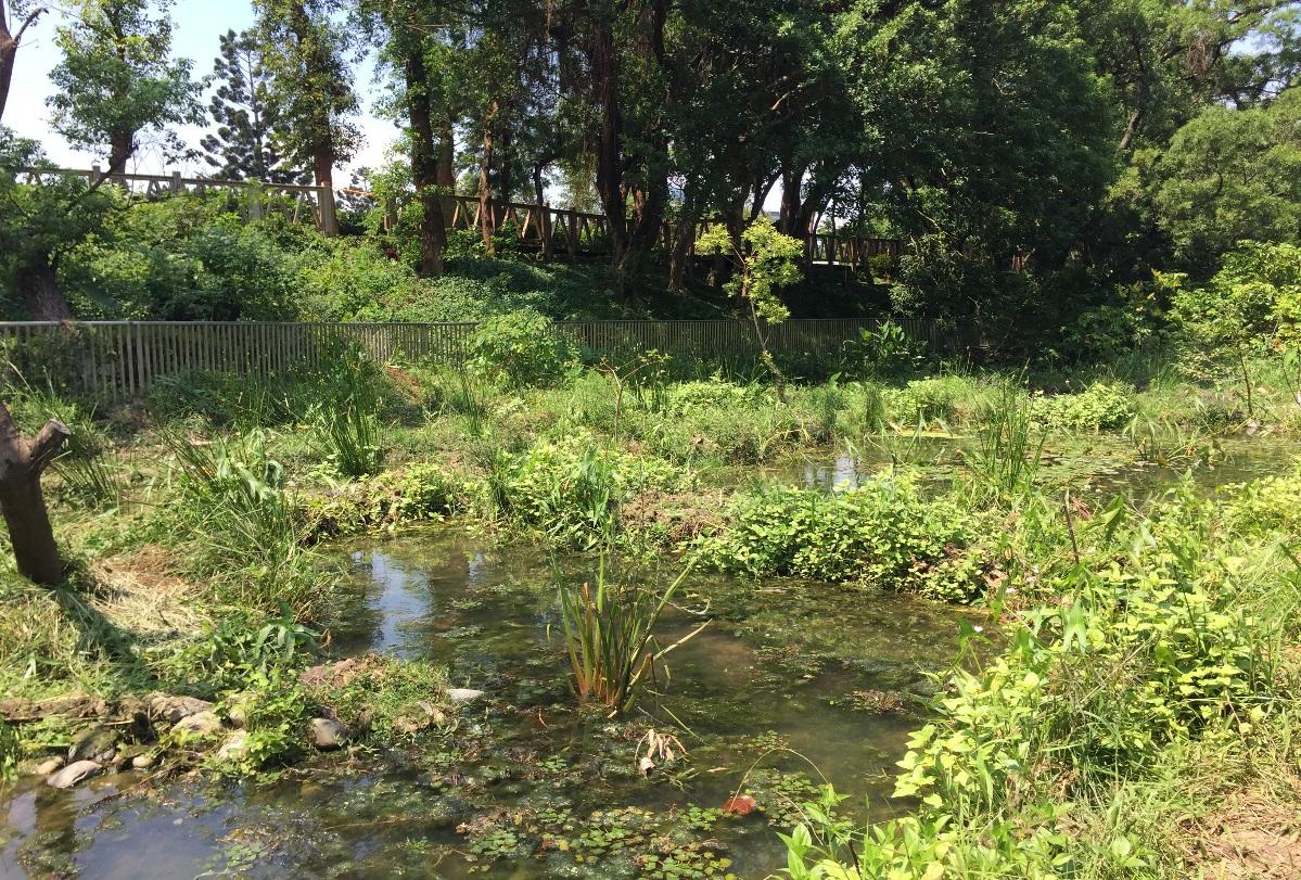 圖3.榮星花園公園生態池現況