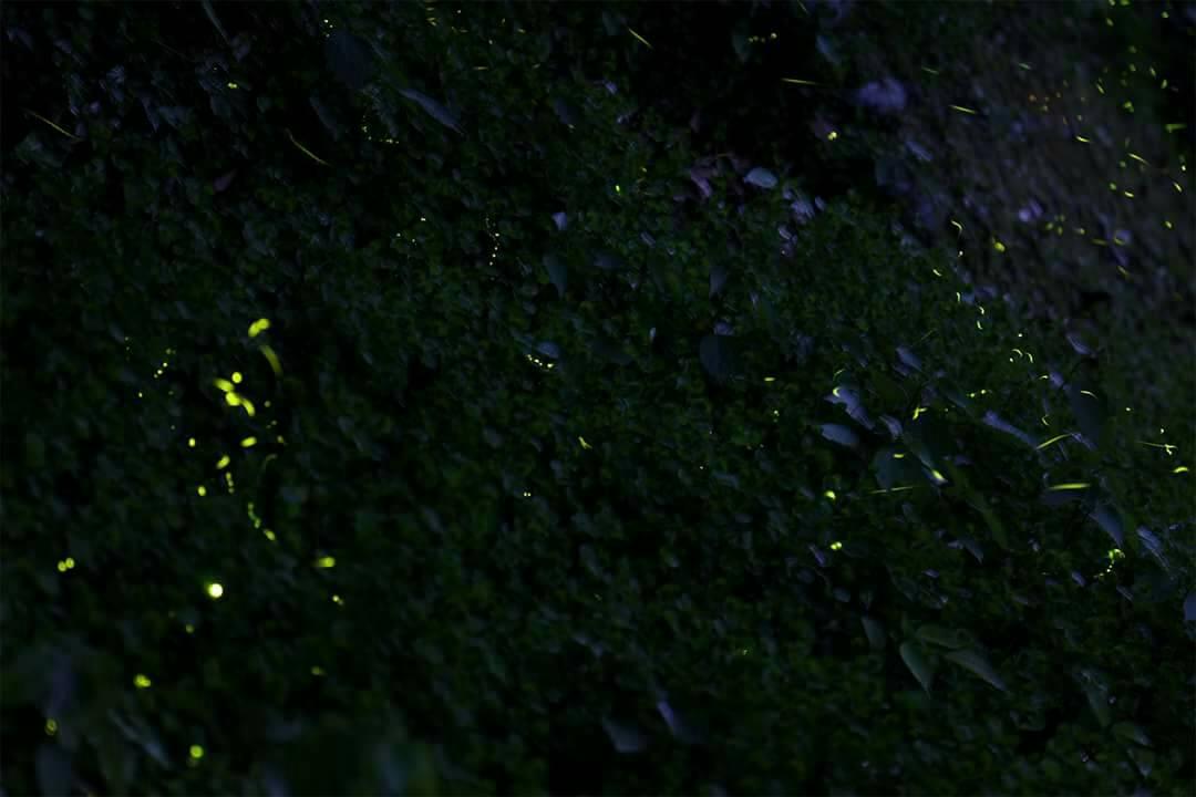 榮星花園公園再加碼推出520、521日週末夜間1900的生態池解說導覽 (3)