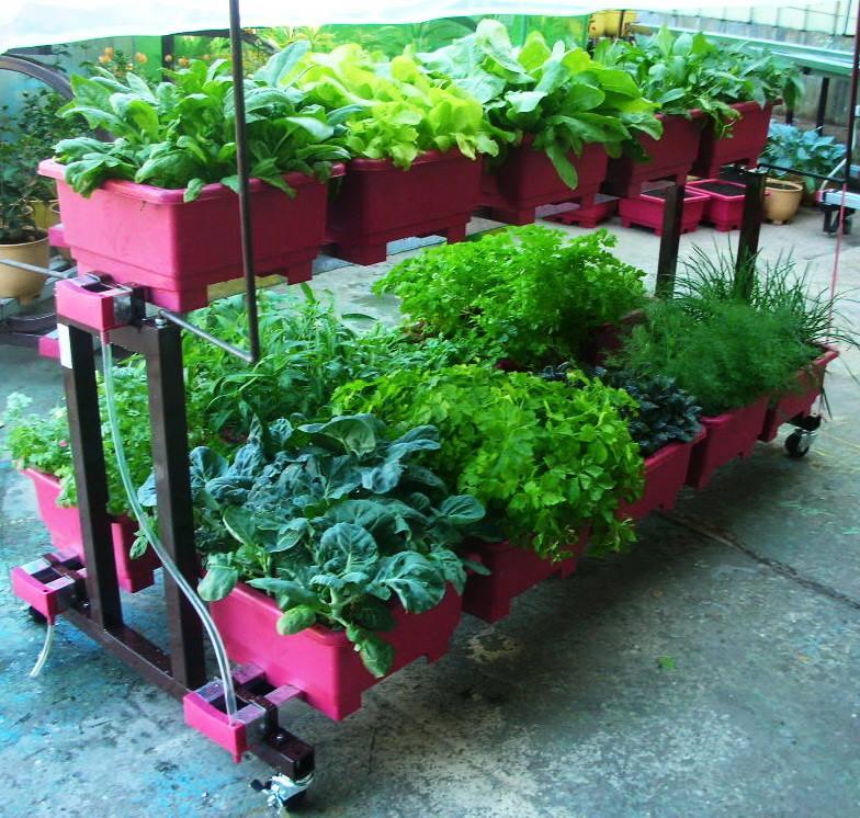 244綠帆船-居家DIY立體種菜架