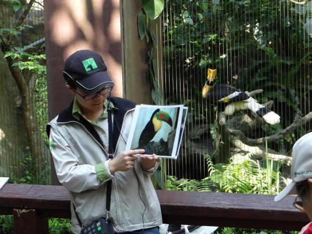 大嘴鳥和大犀鳥不同-Keeper's talk