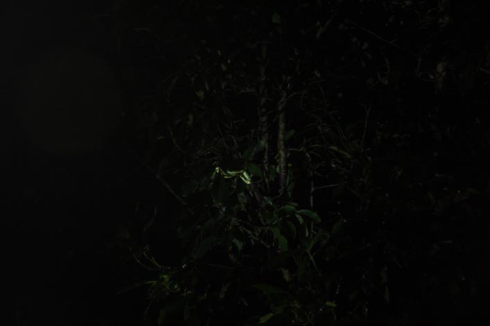樹上發現一隻正在睡覺的青蛇!!![開啟新連結]