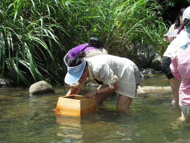 森林水泱泱-自然溪流生態觀察[開啟新連結]