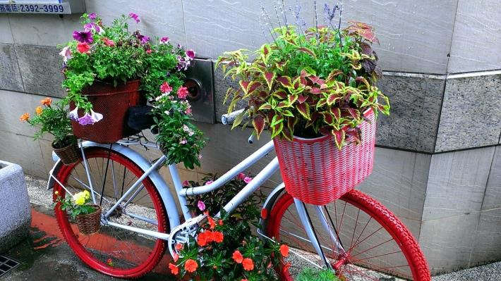 背景照片-廢棄的腳踏車改頭換面成了裝置藝術