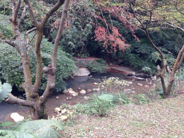 菁礐溪旁楓葉已漸漸變色