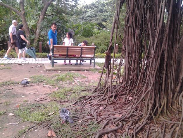 6.公園內有可愛的松鼠和鴿子