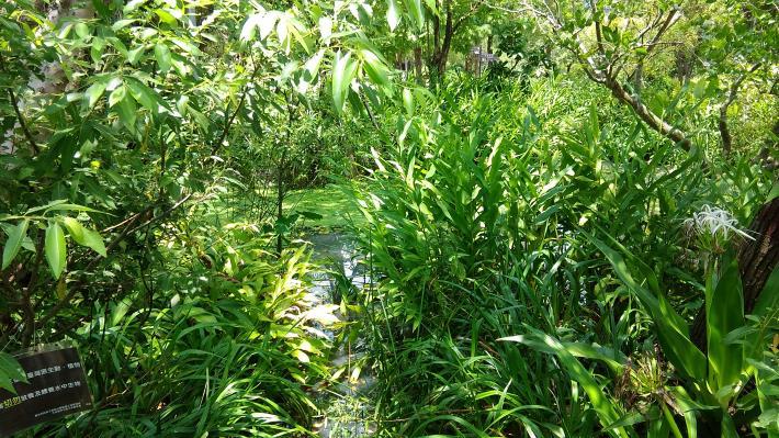 圖2.豐富的植物相提供動物良好棲地[開啟新連結]