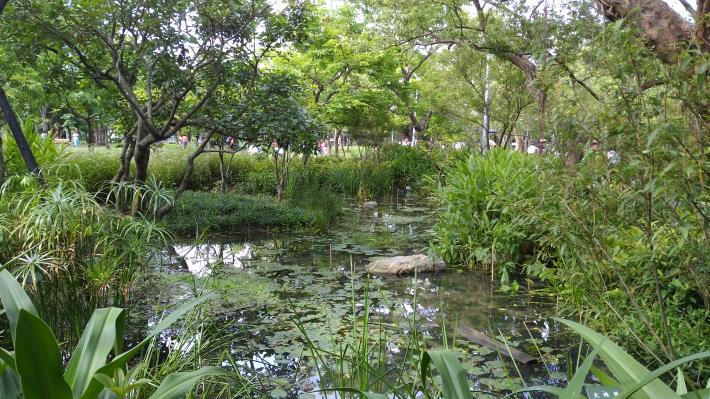 圖1.復育有成的小生態池綠意盎然[開啟新連結]
