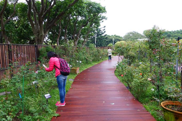圖2、臺北玫瑰園園內一偶,園內經全面整修後煥然一新。