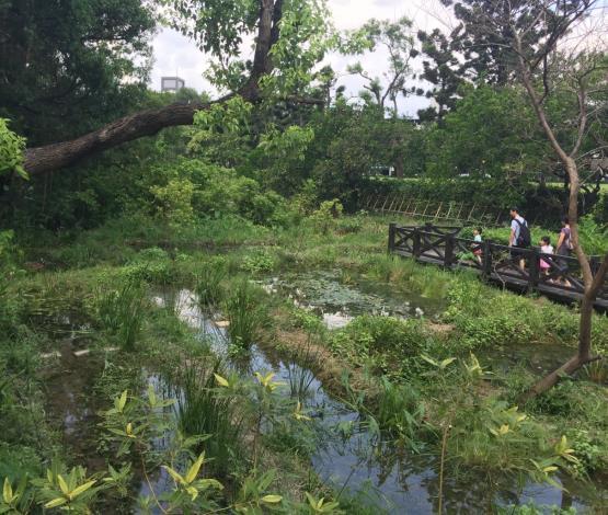 榮星花園生態池水域水生植物豐富[另開新視窗]