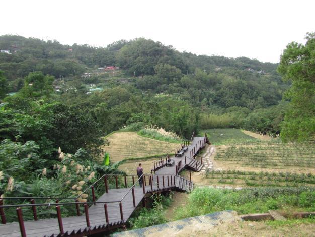 照片05 茶園間木棧道