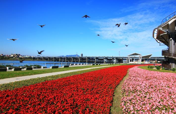 花海位於迪化跨堤景觀平台下方