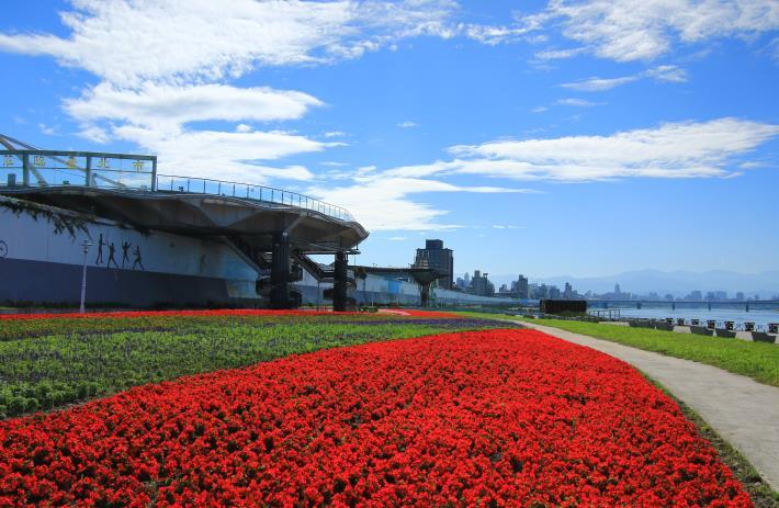 敦煌碼頭的花海盛開