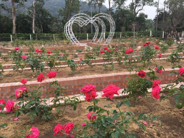 圖1. 滿園玫瑰搭配心型拱門更顯浪漫