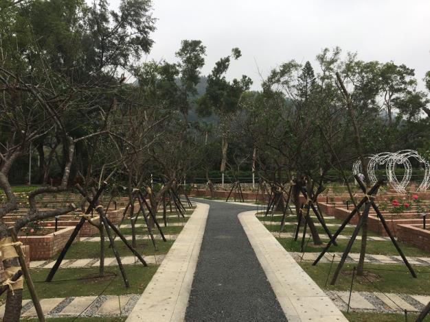 圖3.綠色工法修舊如舊的玫瑰園,梅花陸續綻放中