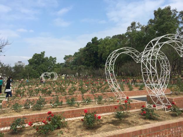 圖2.各色玫瑰重現士林官邸玫瑰園昔日風采