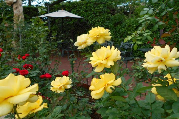 圖2、臺北玫瑰園玫瑰盛開,花團錦簇,處處都有典雅優美景緻。[另開新視窗]