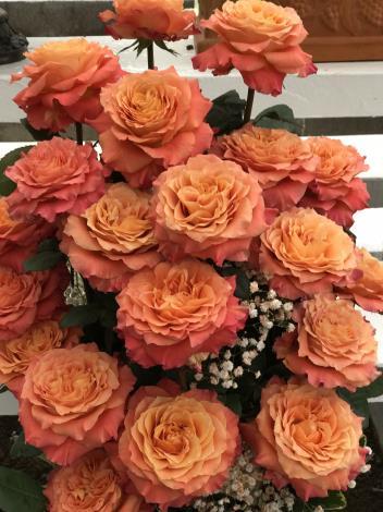 圖12.玫瑰花展