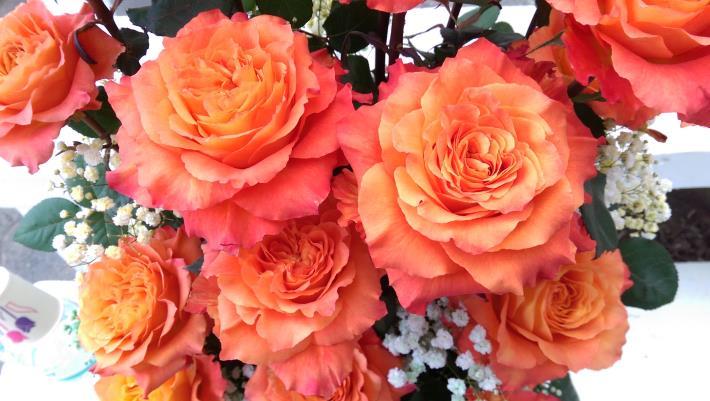 圖3. 來自厄瓜多的「咖啡時光」玫瑰。