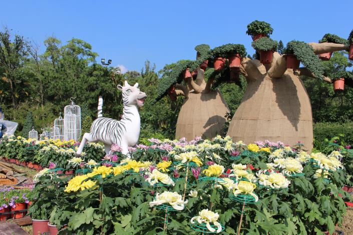 圖1、「馬達加斯加」的河馬莉與菊花相映成趣