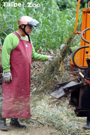 動物吃剩的植物枝條,切碎後混合動物糞便製作有機堆肥