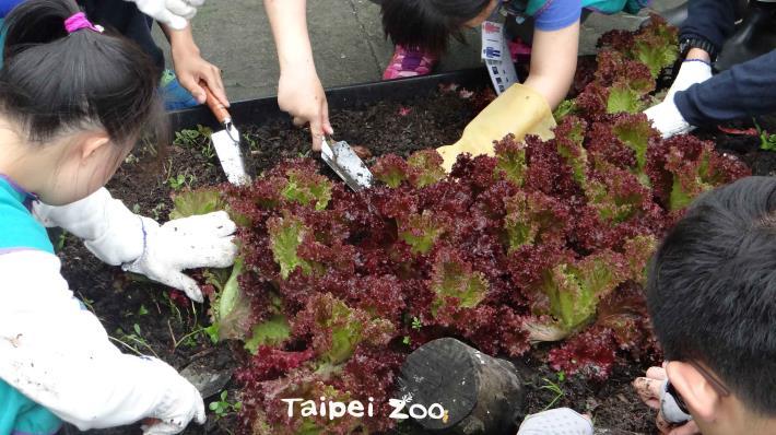 動物園與文山特殊教育學校合作,於兒童動物園區開闢園藝課程
