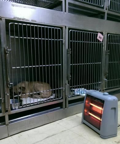 4.給予幼犬暖氣保暖