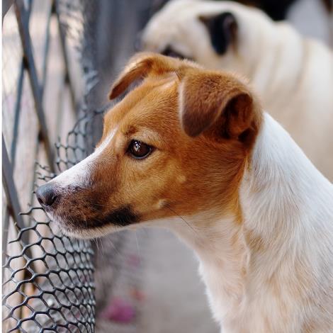 臺北市檢舉違反動物保護法規案件獎金發放要點