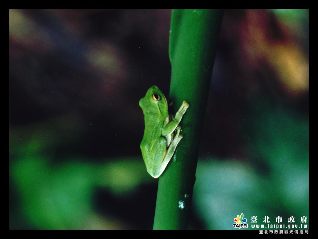 樹蛙1024x768