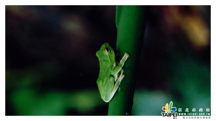 樹蛙1240x698[開啟新連結]