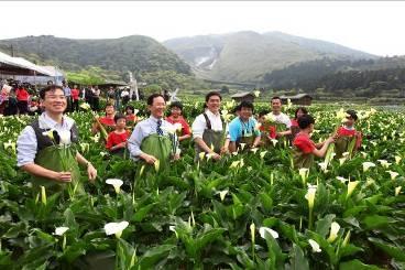 2012年竹子湖海芋季