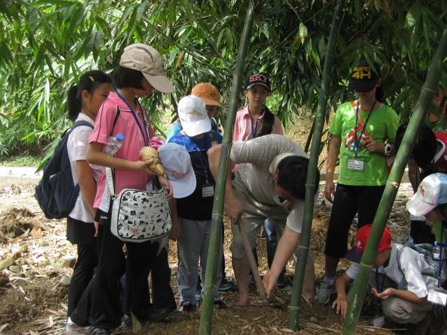 木柵綠竹筍體驗活動