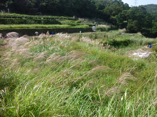 樟樹步道沿線閒置農地(改善前)