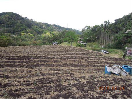 閒置農地活化(下基肥與種植茶苗)