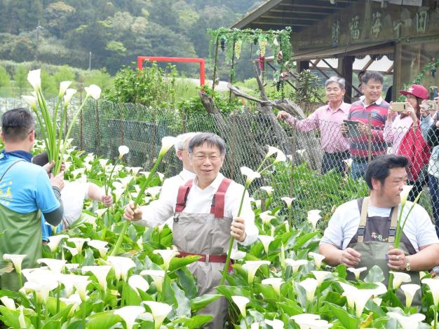 圖5.台北市長柯文哲換上青蛙裝體驗採海芋的樂趣。[開啟新連結]