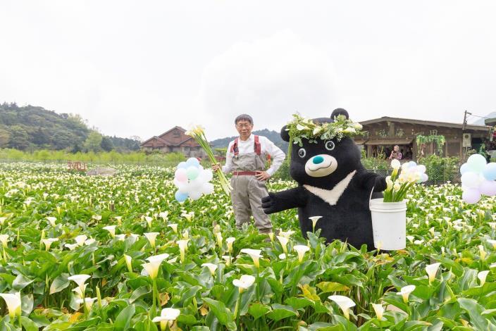 圖6.台北市長柯文哲與熊讚一同體驗採海芋。[開啟新連結]