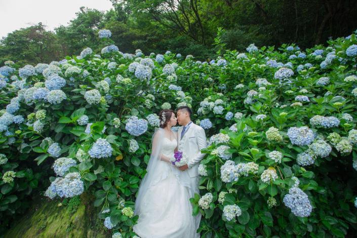 圖7.繡球花花季時間為五月中到六月中,為最佳婚攝時間(圖片提供-最佳風情婚紗攝影)[另開新視窗]