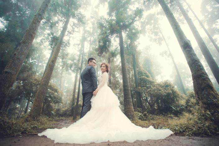 圖2.竹子湖柳杉林(圖片提供-最佳風情婚紗攝影)[另開新視窗]