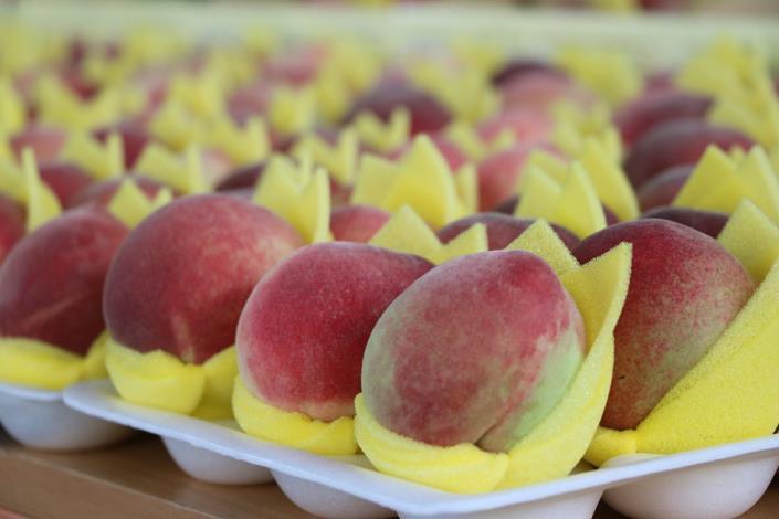 圖3.產地直送優質水果-五月桃