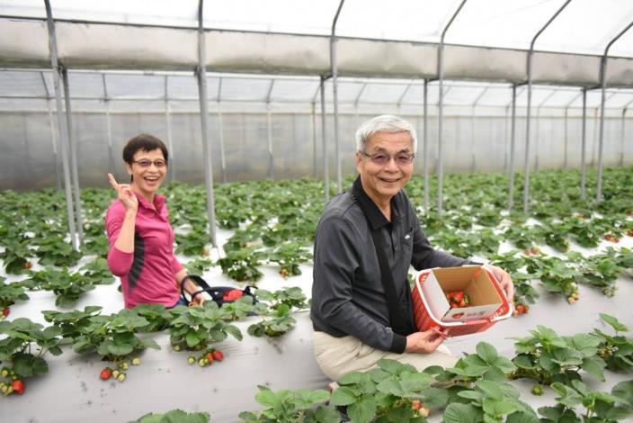 圖3.草莓園觀光採果情況(清香農場)