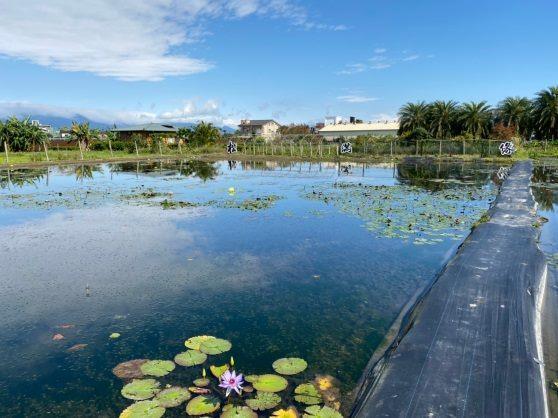 圖2.在宜蘭松滿緣的蓮花池水質相當清澈。