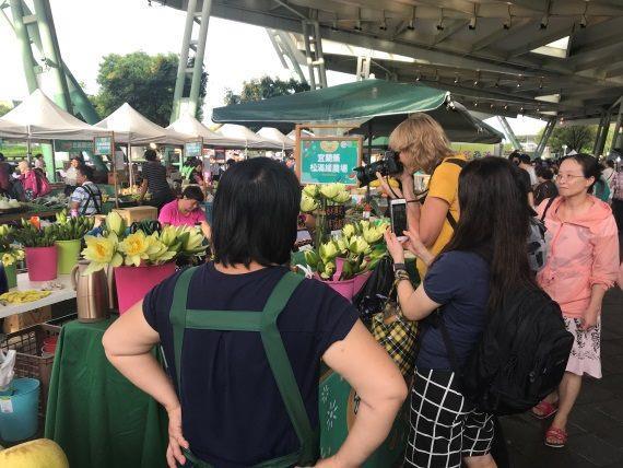 圖4.在花博農民市集就可以購買到新鮮睡蓮