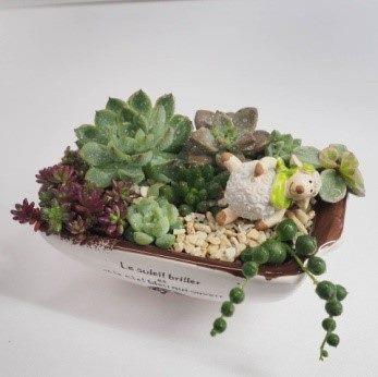 圖7.石蓮組合盆栽
