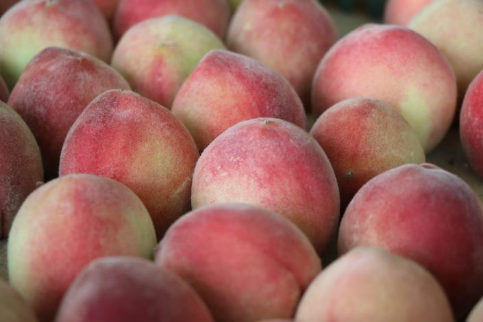 桃園拉拉山水蜜桃。